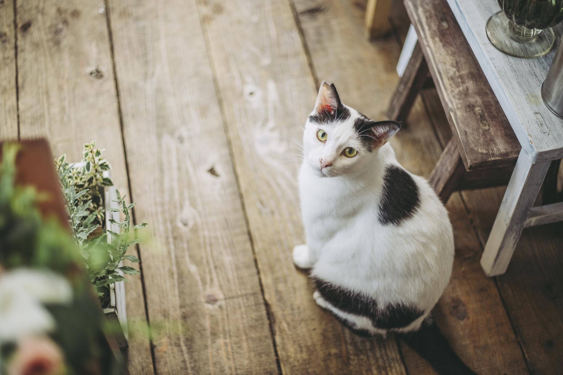 猫好き、ミステリ好きにオススメの猫ミステリ小説10選をご紹介!