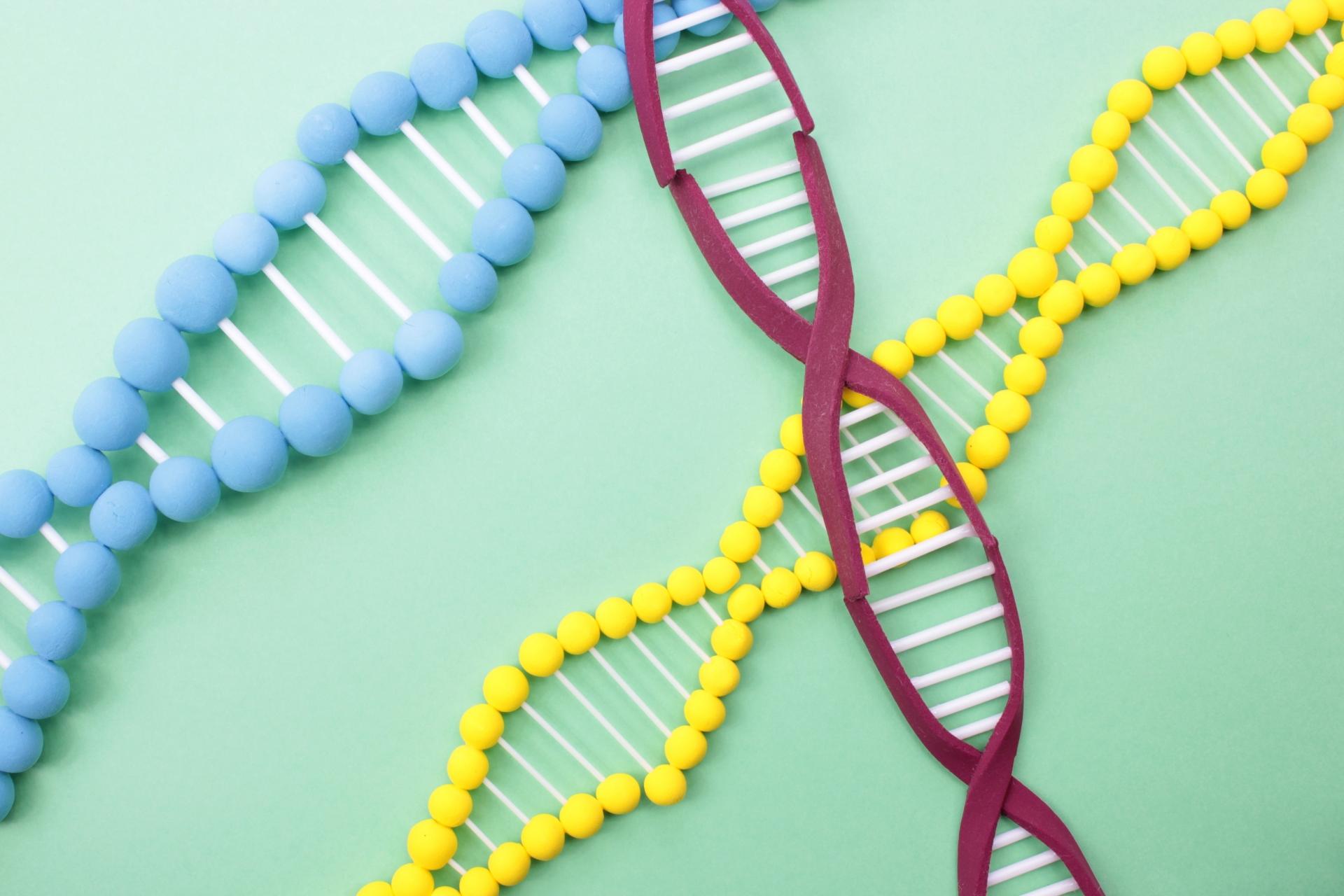 毛深いのは遺伝する?遺伝が原因で体毛の濃い人は脱毛がおすすめな理由
